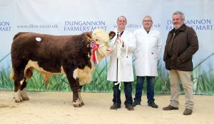 18 Oct 2016 - John and Sean Conlon, Markethill, and judge John Gill, with their overall champion Drumatee Mojo at Tuesday's Hereford show and sale, Dungannon. Picture: Cliff Donaldson