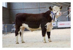 Reserve Senior Champion Solpoll 1 Nobility Owned and bred by J&W McMordie