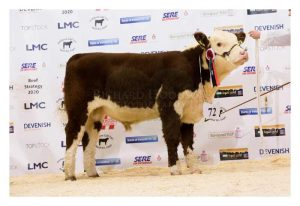 Junior Champion Solpoll 1 National Owned and bred by J&W McMordie