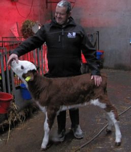 Richard Elliott Jnr with one of their Hereford X Calves