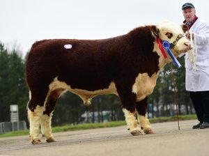 Reserve Champion River Dale 1 Neptune owned by Norman McMordie and family
