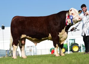 Reserve overall Champion Peartree 1 Ed owned and. Red by William Connolly