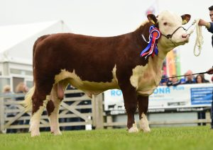 Solpoll 1 National owned and bred by J&W McMordie