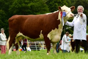 John Gills senior cow winner Lusky 1 Honour