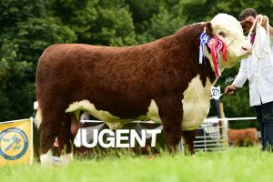 Overall Reserve Champion went to Alwyn Armours Woodvale 1 Limited Edition