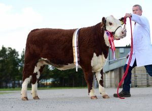 Supreme Female and senior female champion Mountview 1 Forever owned and bred by Trevor Andrews