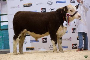 Junior Male Champion Drumshanbo 1 Big Show with owner and breeder Ethan Small