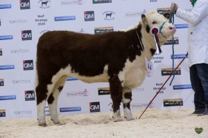 Annaghbeg Delilah who won reserve senior title