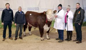Supreme Champion Carney Hill 1 Nectar owned and Bred by John Taggart